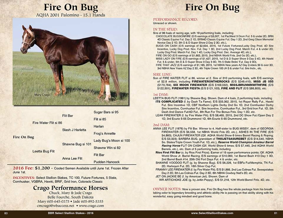 Fire On Bug Catalog Page