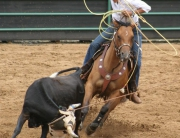 Peters roping 2